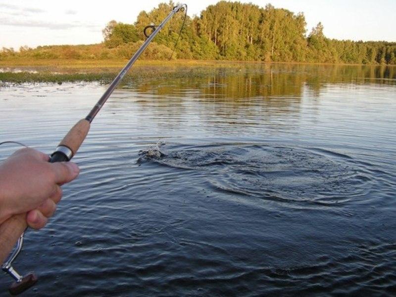Подсечка при ловле на спиннинг