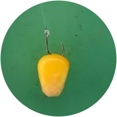 Правильная насадка кукурузы на крючок